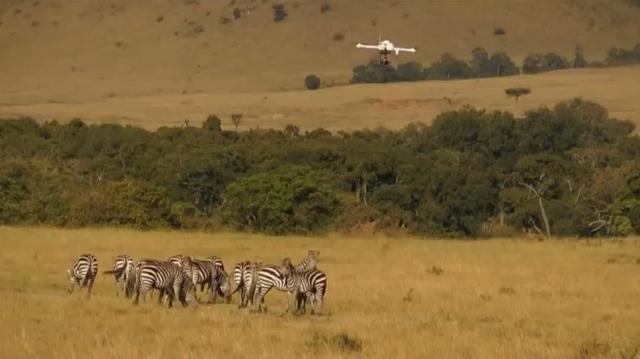 Квадрокоптер в африканской саванне (видео)