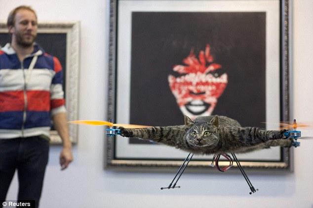 Летающая кошка из Голландии (5 фото + видео)